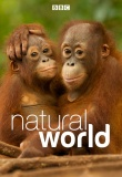 BBC: Natural World