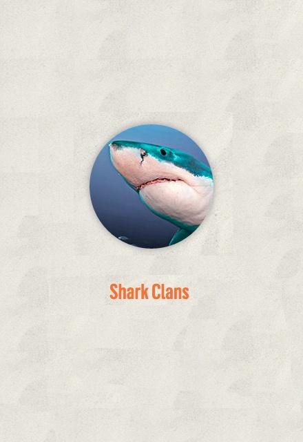Shark Clans